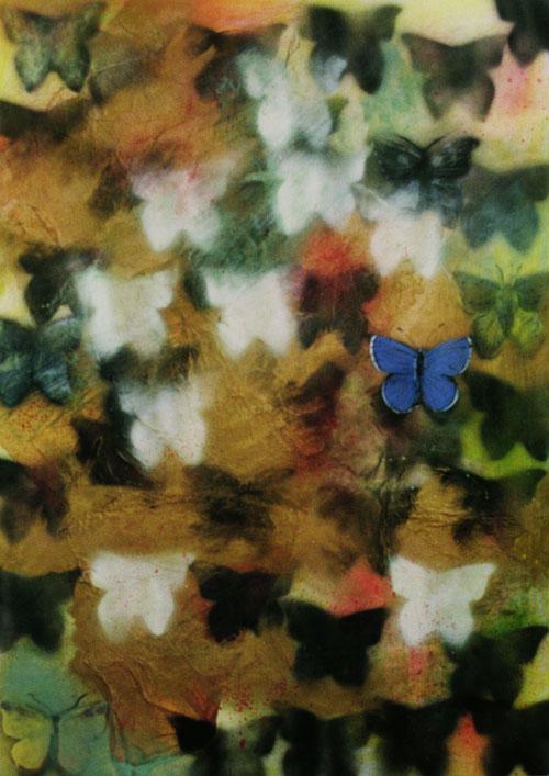 blue-butterfly1